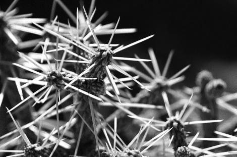 Desert flowers. By Alvaro Montagna