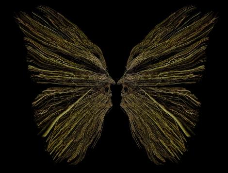 Alvaro-Montagna-reartiste_Butterfly-art