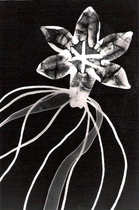 Man Ray's ryogrammes